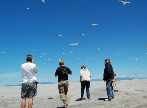 Farewell Spit Eco Tours