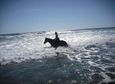 Wildcoast Ruapuke Horse Riding