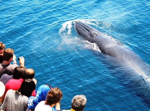 Auckland Whale and Dolphin Safari (AWADS)