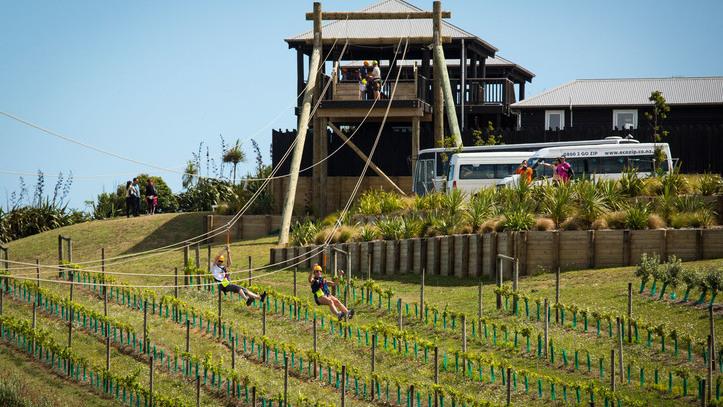 Ecozip Adventures Ziplining Auckland Waiheke Ecozip Travel New Zealand